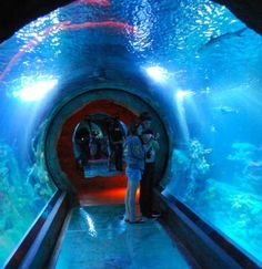 Sea Life Arizona Aquarium at Arizona Mill Mall in Tempe, Ariz.