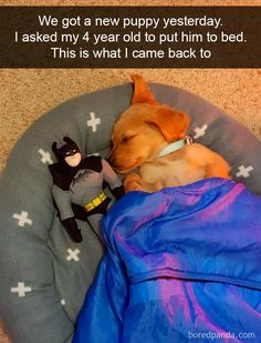 118 Funny And Cute Dog Snapchats (New Pics)