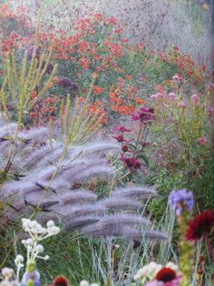 Rambulation : 'Dutch Wave' garden plants for the Piet Oudolf look, suggested by the Daily Telegraph. Prairie Planting, Prairie Garden, Meadow Garden, Dream Garden, Beautiful Gardens, Beautiful Flowers, Autumn Garden, Ornamental Grasses, Plant Design