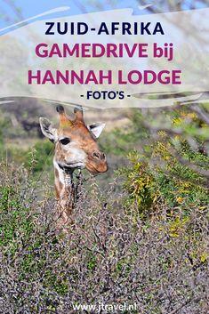 De eerste gamedrive tijdens mijn rondreis door Zuid-Afrika maakte ik bij Hannah Lodge. Ik zag hier veel buffels en van dichtbij giraffes en neushoorns. Wil je meer foto's zien van de game drive bij Hannah Lodge klik dan hier. Kijk je mee? #hannahlodge #wildlife #gamedrive #zuidafrika #jtravel #jtravelblog #fotos