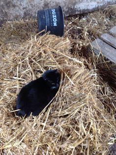 1 van onze 6 katten