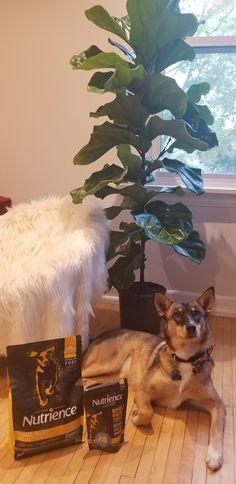 Fraser Valley, Dog Food Recipes, Dogs, Animals, Animales, Animaux, Pet Dogs, Dog Recipes, Doggies
