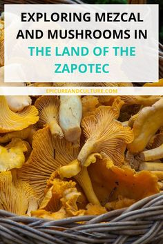 Exploring Mezca and mushrooms in the land of the Zapotec