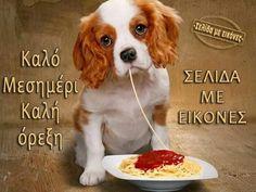Animals And Pets, Cute Animals, Dog Logo, Dog Feeding, Funny Dogs, Good Morning, Boxer, Corgi, Puppies