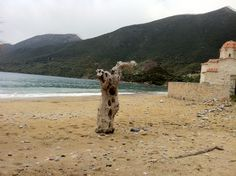 Beach Agias Barbaras Skoutari Lakonias
