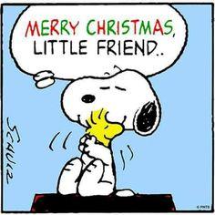 Merry Christmas little friends. .