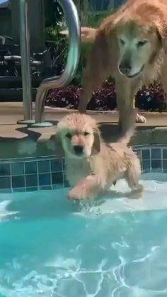 Super Cute Puppies, Baby Animals Super Cute, Cute Wild Animals, Baby Animals Pictures, Cute Baby Dogs, Cute Little Puppies, Cute Funny Dogs, Cute Animal Photos, Cute Animal Videos