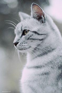 Bokeh kitty ✿⊱╮