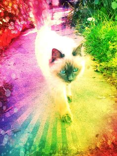walk in the rainbow with me..kitty