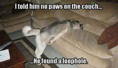Told him no paws on the couch – dog meme