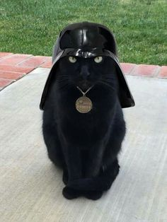 Dark Gatoo