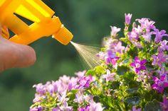 Bryder du dig heller ikke om at sprøjte dine planter til med udkrudtsmidler? Så er her en opskrift på et hjemmelavet middel mod bladlus - med hvidløg.