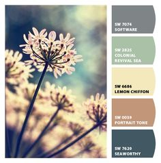 Paint colors from Chip It! by Sherwin-Williams Queen Anne's Lace Flowers, Wild Flowers, Beautiful Flowers, Spring Flowers, Tropical Flowers, Cactus E Suculentas, Dame Nature, Queen Annes Lace, Pretty Pictures