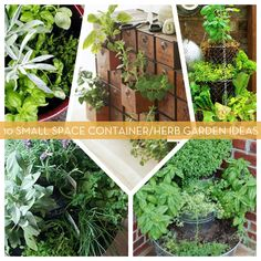 10 Small Space Container/Herb Garden Ideas