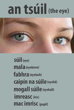 #irishfortheeyes. Learn Gaeilge, the Irish language. eye, eyes, eyebrow, eyelash, eyeball, eyelid, pupil iris, body