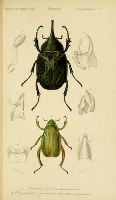 v. 2 1849 - Atlas (Zoologie - Reptiles, Poissons & Insectes) - Dictionnaire…