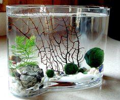 Zen Big Wave Marimo Ball Unique Mini Aquarium/Terrarium