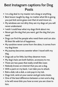 Dog Captions For Insta, Dog Instagram Captions, Funny Captions, Instagram Quotes, Picture Captions, Instagram Story, Puppy Quotes, Caption For Yourself, Story Quotes