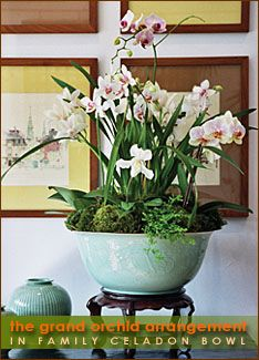 orchid arrangement in celadon bowl on stand