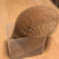 MeowMoe - just cats being cats : __akira_akira__ . Cute Little Animals, Cute Funny Animals, Funny Cats, Cool Pets, Cute Dogs, Beautiful Cats, Animals Beautiful, Gato Gif, Video Chat