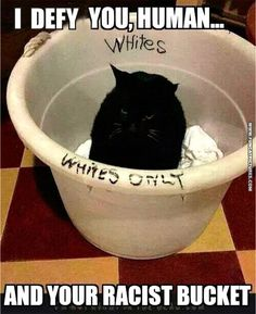 funny-cat-pictures-racist-cat-in-a-bucket