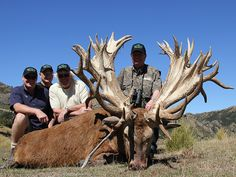 Spey Creek Trophy Hunting New Zealand Red Stag Elk Hunts Kaikoura Lodge Deer Hunt Trophies Bow Rifle