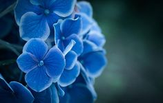 ~~ invited by blue by yasuhito shinagawa ~~