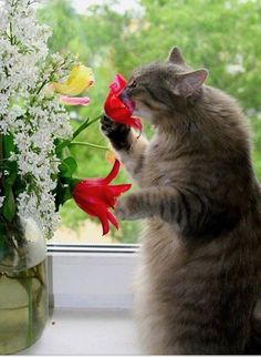 23 Cats Who Love Flowers So Much They Should Be Florists - Page 3 of 8 - The Cutest Kitties Cute Kittens, Cats And Kittens, Ragdoll Kittens, Tabby Cats, Bengal Cats, Kitty Cats, Animals And Pets, Funny Animals, Cute Animals