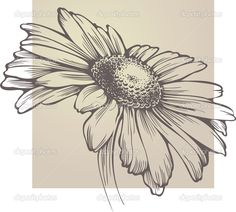 Vector chamomile flower isolated — Stock Vector © Mur34 #6608891