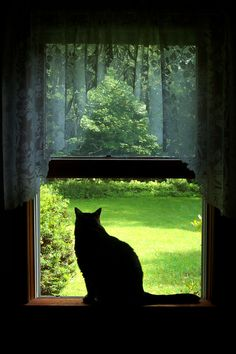 """""""The idea of calm exists in a sitting cat.""""  Jules Renard"""