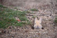 Bunny うさぎ