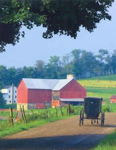 Amish buggy on road to red barn