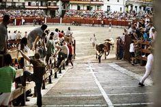 Segundo encierro de #FiestasChinchón2015. Última carrera por las calles del municipio.