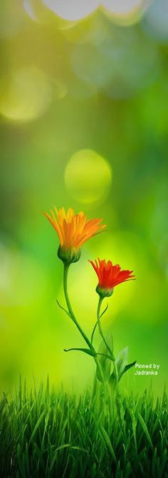 Jadranka & Beautiful world Seasons Poem, Seasons Of Life, Colourful Wallpaper Iphone, Green Magic, Love Matters, Thanksgiving Greetings, Bokeh Photography, Red Cottage, Rainbow Colours