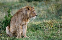 Ngorongoro Wildlife Photos – Images & pictures of Ngorongoro Crater