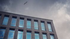 Seagull over the Spree River / Berlin. Photo by Malnox