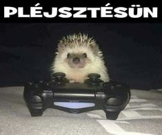 Na ja Hehehe Animals And Pets, Funny Animals, Cute Animals, Funny Fails, Funny Memes, Jokes, Wholesome Memes, Sarcastic Humor, Animal Memes