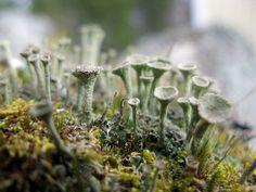 strange fungi...