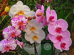Nature : the fascination of orchids in a flower shop - azisannnu. #Pinterest #photo #photography #landscape #people #girl #girls #hot #naked #cute #food #sport #travel #dress #fashion