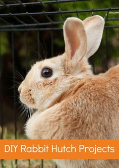 DIY Project: Build Your Own Rabbit Hutch. Have you ever thought about keeping rabbits in your garden? As pets or for meat.