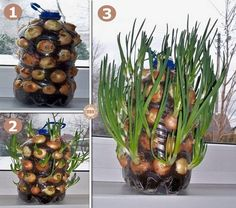 Vertical onion planter