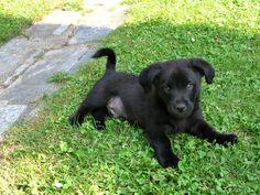 Koło domu: Psie figle