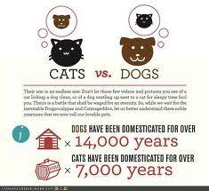 Cat lovers vs dog lovers