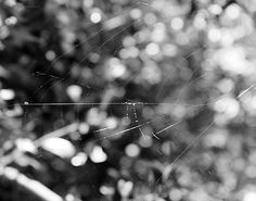 Oh, The Web We Weave by Traditionally Unique Photography