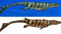 Colombia Marine Reptile
