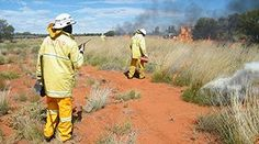 Our rangers use a mix of traditional knowledge and modern science to conserve the plants, animals, culture and landscapes of Uluru-Kata Tjuta National Park. Conservation, Ranger, National Parks, Landscape, Animals, Outdoor, Outdoors, Scenery, Animales