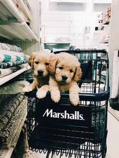 p i n t e r e s t: ✰ casey elizabeth ✰ - Cute dogs - Perros Super Cute Puppies, Cute Dogs And Puppies, I Love Dogs, Puppies Puppies, Cutest Dogs, Retriever Puppies, Teacup Puppies, Cute Little Animals, Cute Funny Animals