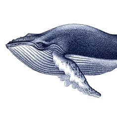 Blue Humpback Whale Portrait Nautical Vintage di brightforest, $10.00