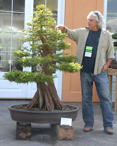 Bonsai Cypress Trees!! A must have!