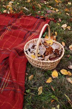 Fall picnic...